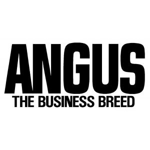 Angus The Business Breed