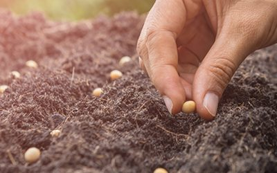 Ag Marketing: Plant Seeds Now